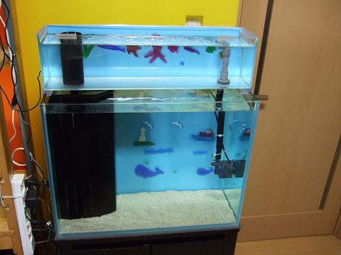 立ち上げ中の「カエルアンコウ水槽」