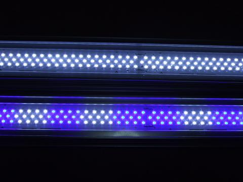ゼンスイLEDランプ・上が「ホワイト」で、下が「ホワイト・ブルー」です。