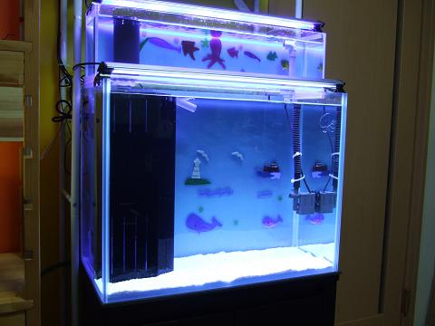 海水魚水槽らしくなってきたおいらの水槽です。