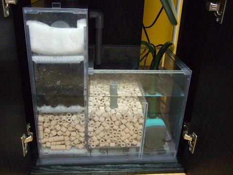 立ち上げ中の水槽の濾過槽