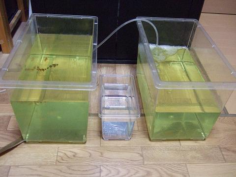 淡水浴セットの準備