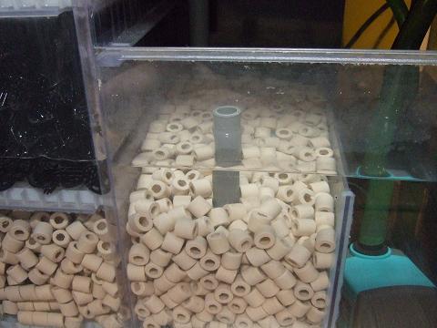 アラゴナイトを入れる前の濾過槽