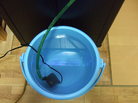 バケツで作った新しい海水にポンプをセット