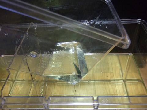 プラケース(小)で魚をすくいます。