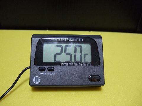 カエルアンコウの飼育水温「25度」
