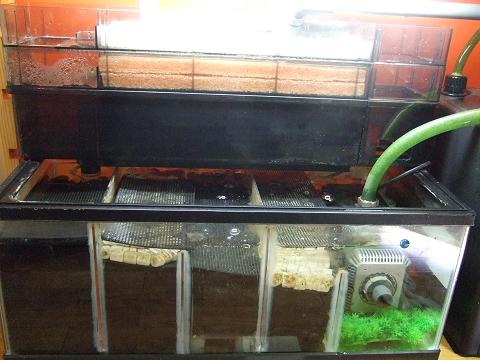 多段連結OF水槽の濾過槽です!!
