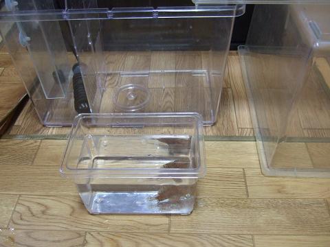温度合わせの済んだカエルアンコウをプラケース(小)で捕獲