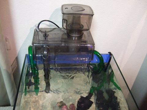 海道河童を水槽にセットしました。