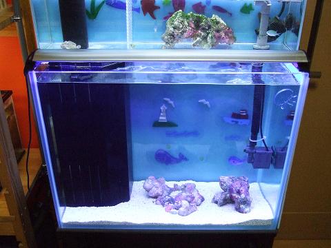 カエルアンコウ水槽の1階の本水槽
