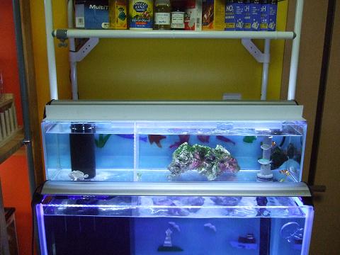カエルアンコウ水槽の2階のスレンダーOF水槽