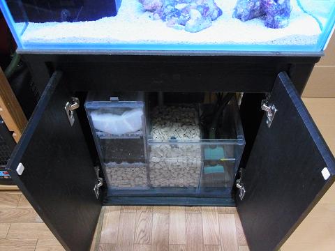 カエルアンコウ水槽の濾過槽