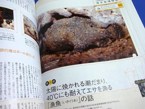 コーラルフィッシュ Vol.24  (海水魚博物誌 水族館仕掛け人・新野大の仰天! カスリカエルアンコウ)