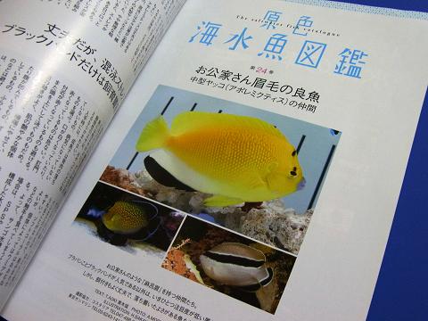 コーラルフィッシュ Vol.22  (原色海水魚図鑑 中型ヤッコ(アポレミクティス)の仲間)