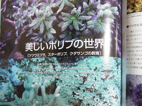 マリンアクアリスト No.66  (美しいポリプの世界・ツツウミヅタ、スターポリプ、クダサンゴの飼育)