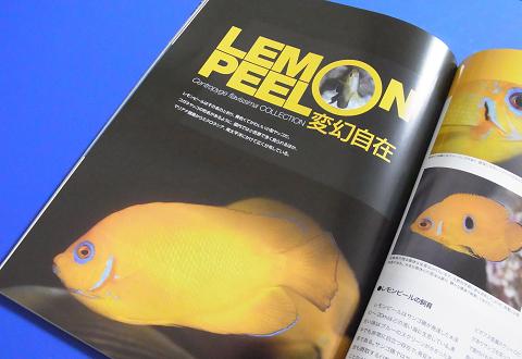 (レモンピール LEMON PEEL 変幻自在)