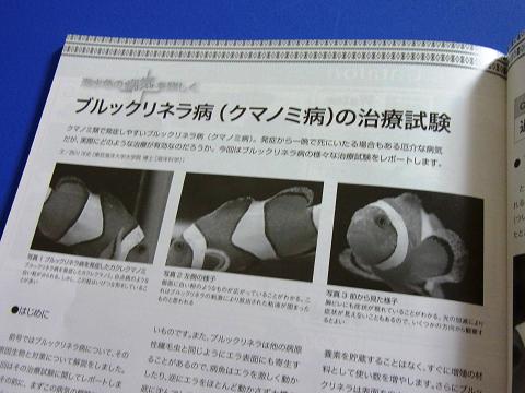 マリンアクアリスト No.66  (ブルックリネラ病(クマノミ病)の治療試験)