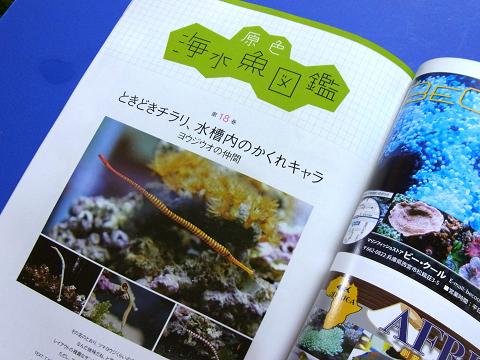コーラルフィッシュ Vol.16 原色海水魚図鑑 ヨウジウオの仲間
